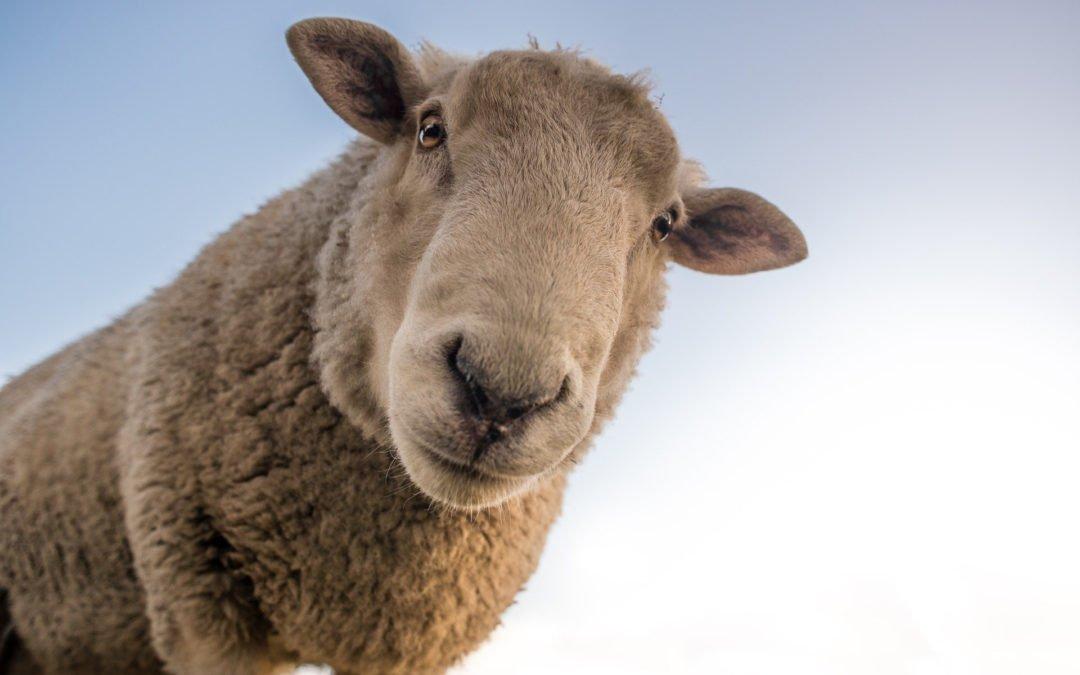 """#Freizeit: """"Schafe, Wolle, Filzen"""" – Noch Plätze frei! Seminar findet statt!"""