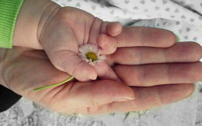 #VAMV: Stellungnahme zum Zweiten Familienentlastungsgesetz