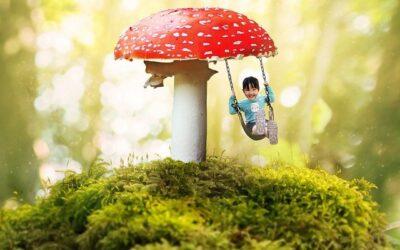 #VAMV: Jetzt anmelden zum Wald- und Wohlfühlwochenende