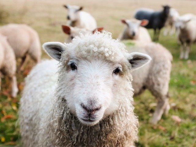 """#Eltern-Kind-Seminar: """"Schafe, Wolle, Filzen"""" – noch ein Platz für VAMV-Mitglieder!"""
